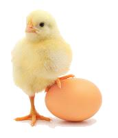 chickbaby1